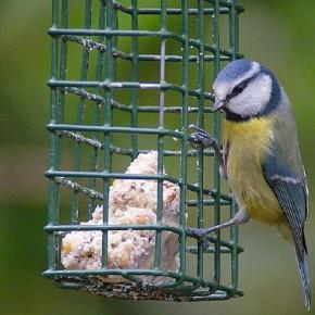 Помогите зимующим птицам