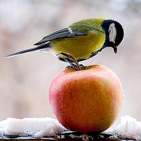 Поможем птицам пережить зимние холода