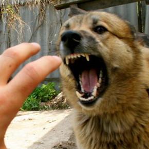 Осторожно, бешеные собаки!