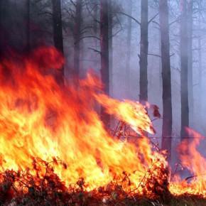 В городе введен «Особый противопожарный режим»